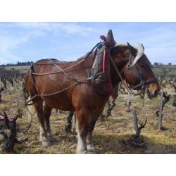 chateauneuf-pape-or-line-blanc-vigneron